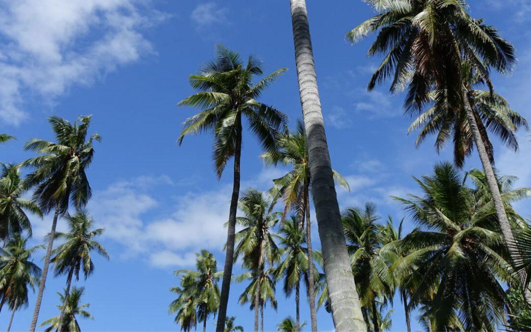 Der große KOPFSACHE Kokosöl Guide: Qualität, Wirkung & Anwendungsbereiche