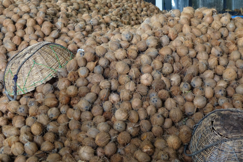 Lagerberg mit Kokosnuessen beim Wareneingang in der Kokosoelherstellung