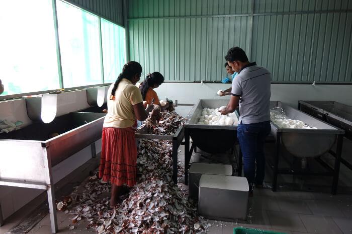 Verarbeitung der Kokosnuesse bei einem Billigproduzenten: ohne Schutzkleidung, Hygienevorkehrungen