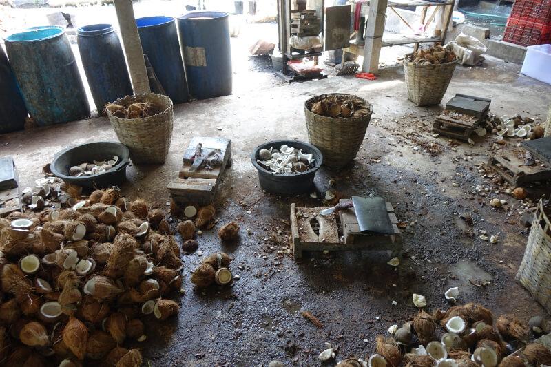 Verarbeitung der Kokosnuesse bei einem Billigproduzenten: im Offenen ohne jegliche Hygienemassnahmen