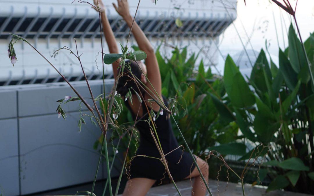 Peace & Presents: Kokosöl-Überraschung im Power Yoga Institute Adventskalender